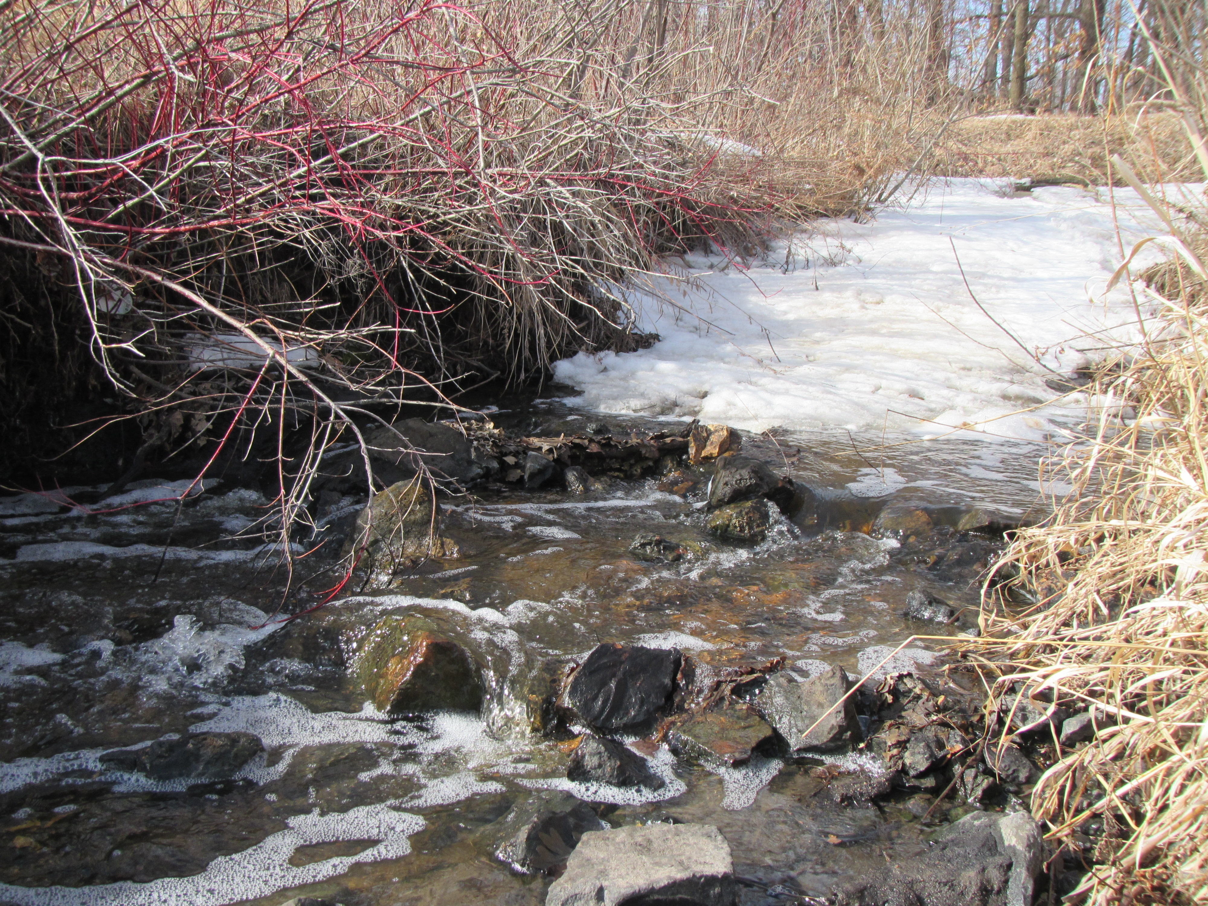 Bluff_Creek_2018Mar16_ice_and_riffles_in_restoration_area.JPG